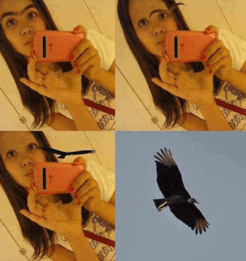 eagle eyebrows pun selfie - 7763552256