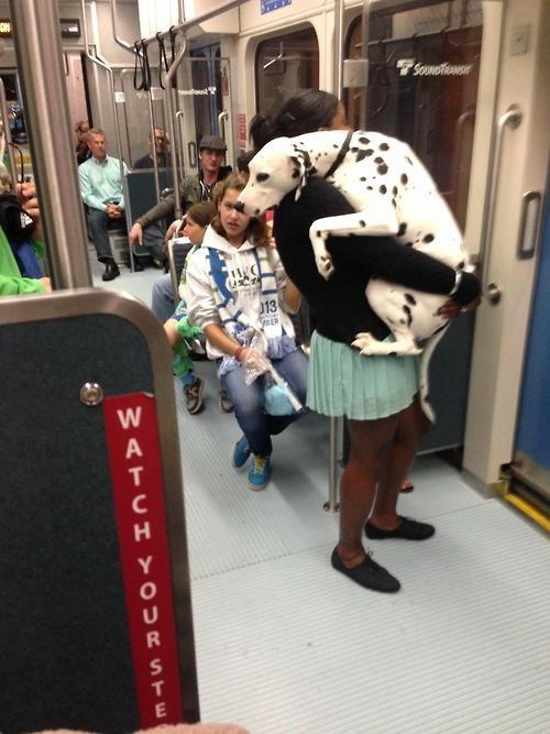 dalmatian mass transit - 7763723008