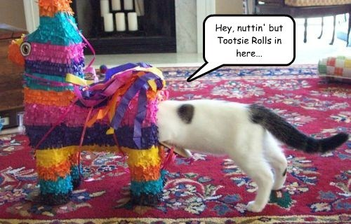 Hey, nuttin' but Tootsie Rolls in here...
