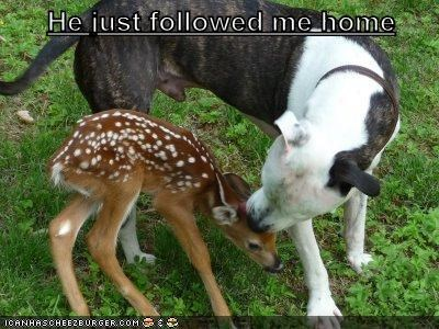 dogs cute fawn dear