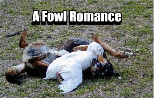 uncommon dogs romance ducks - 7764054784