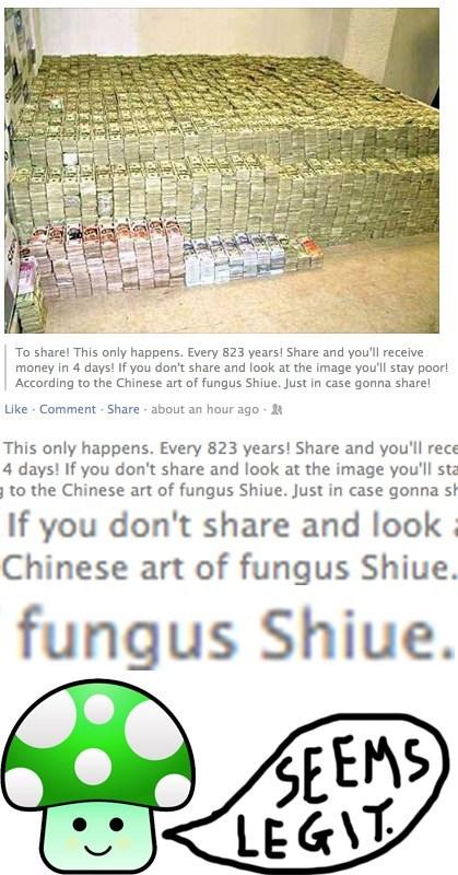 fungus shiue feng shui seems legit - 7764187136