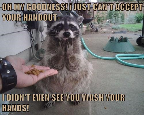 cute,picky,food,raccoons