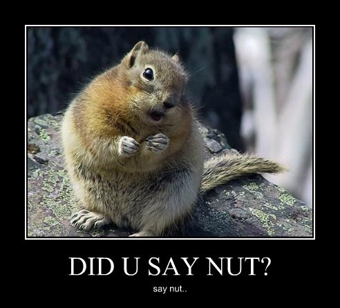 nut squirrel cute - 7764927744