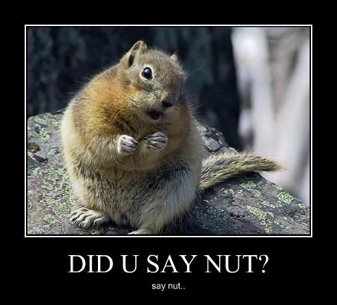 nut squirrel cute - 7764927744