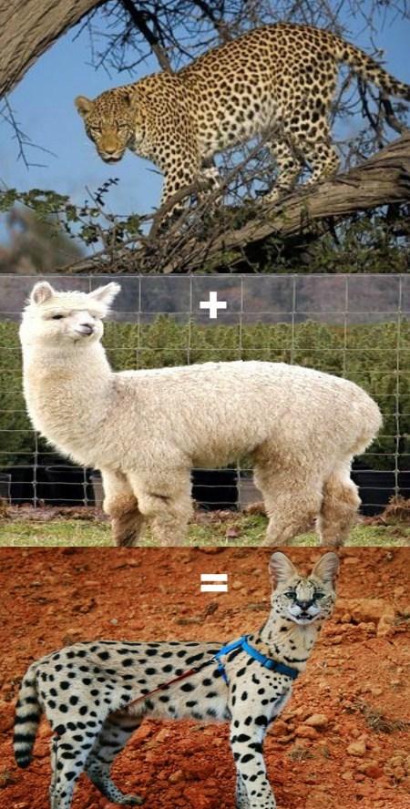 math funny animals - 7764939520