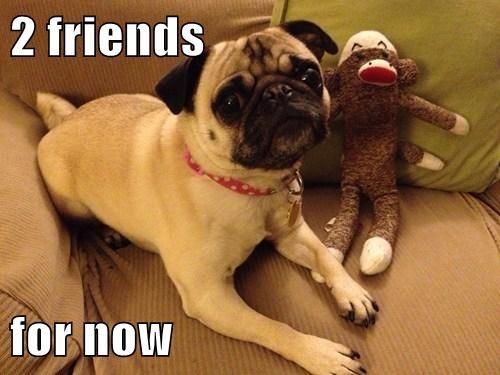 toys chew funny - 7764989184