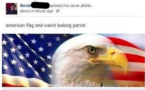 patriotism eagles murica merica america - 7765032704
