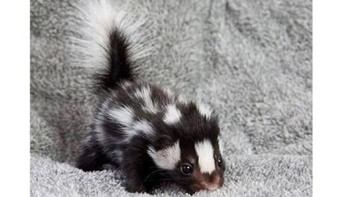 skunk - 7765118208