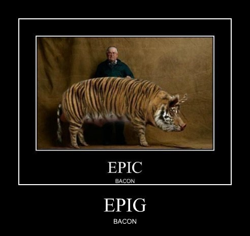 epic pig funny bacon - 7765124864