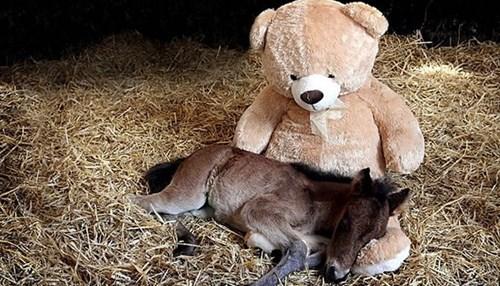 foal,teddy bear,horse