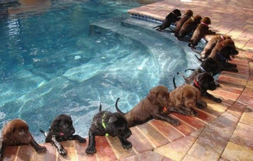 puppies pool summertime