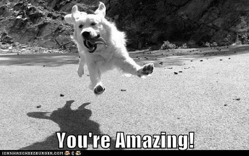 dogs Joy jump amazing happy - 7765438720