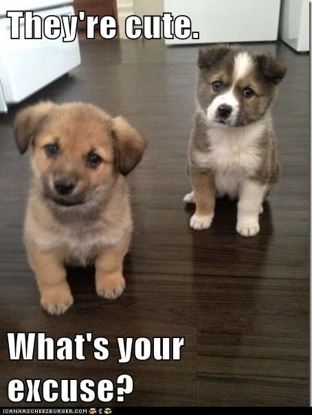 puppies,excuses,cute