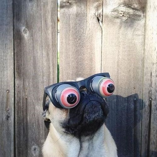 bug eyes dogs - 7765902336