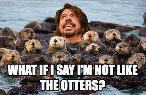 pun,others,otters