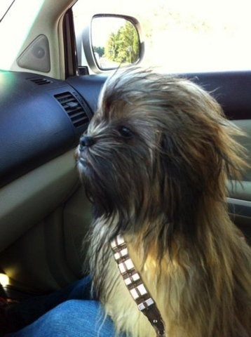 chewbacca Starwars dogs