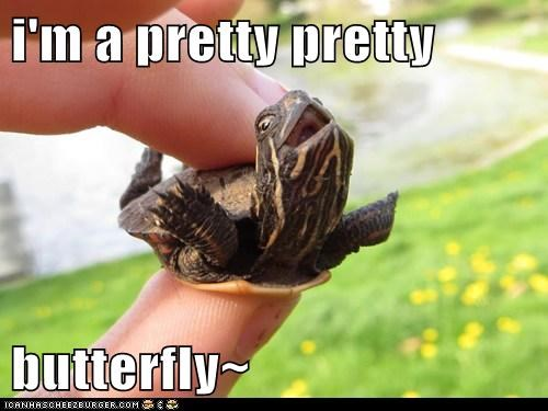 butterflies cute tortoise imagination - 7766033664