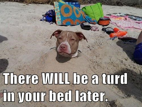 buried,dogs,beach,sand