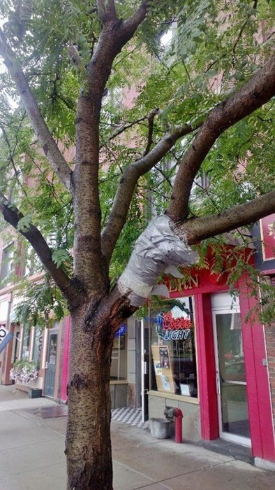 tree,duct tape,funny,there I fixed it