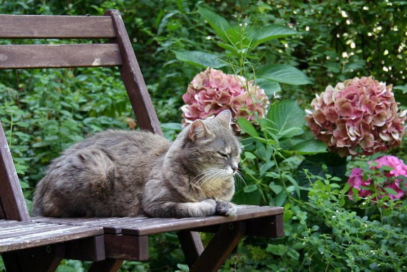 cat friendly plants garden Cats - 7767813