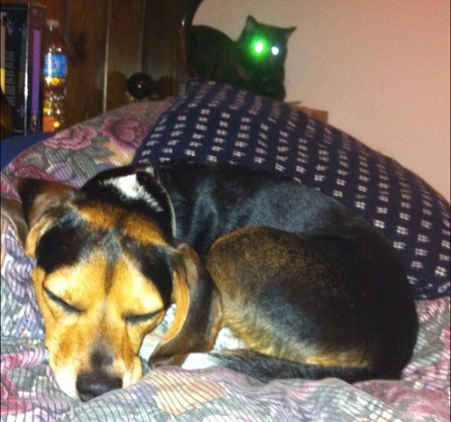 photobomb dogs cute Cats funny - 7767879168