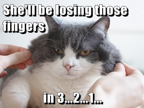 Cheezburger Image 7768307968
