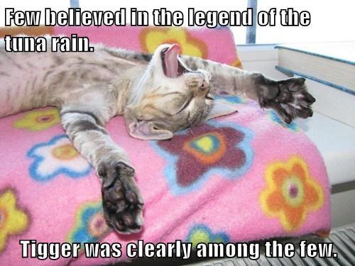 Cheezburger Image 7768565248