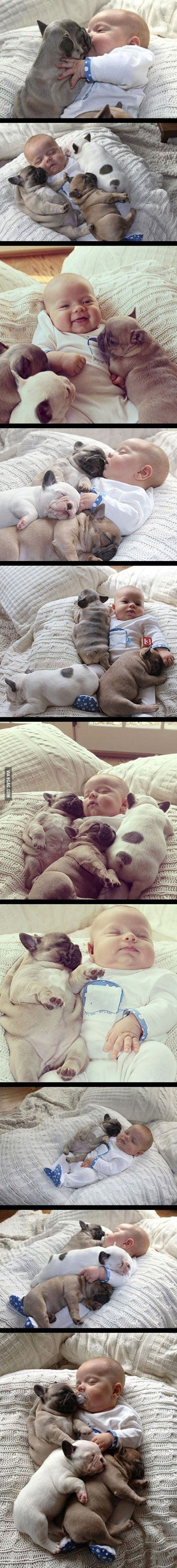 Babies puppies snuggling kissing - 7768635648