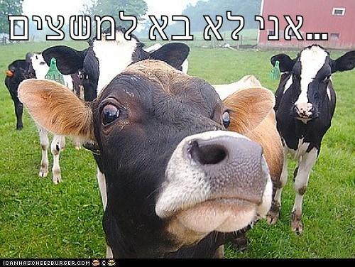 Cheezburger Image 7768753920