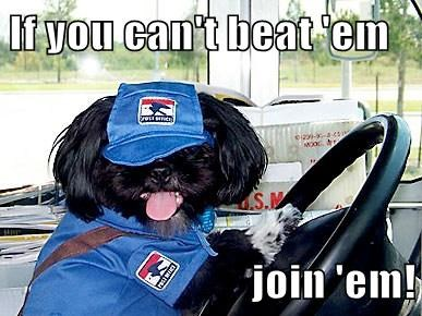 dogs post office mail man - 7768776448