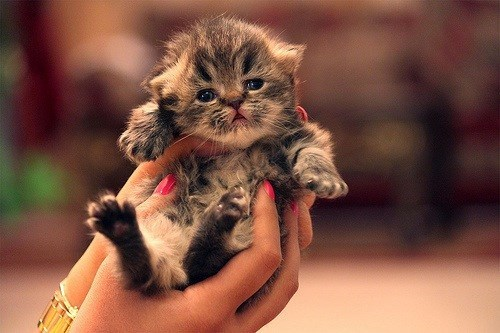 cat kitten - 7768955136