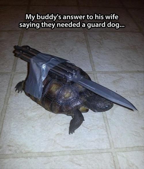 security,knife,turtle