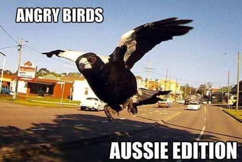 angry birds birds australian - 7769498368