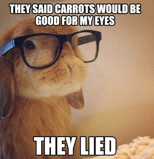 lies rabbit bunny carrots - 7769519616