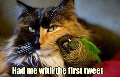 friendship birds Cats - 7770006016