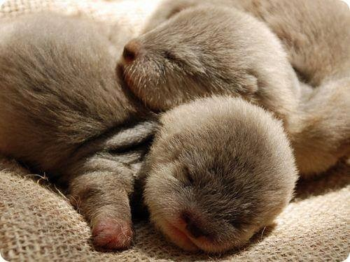 baby,snuggle,cute,otters,sleeping