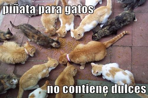 gatos bromas Memes animales - 7770513920