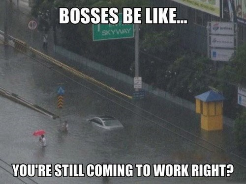 flash flood,bosses,flooding,monday thru friday,g rated