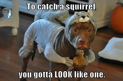dogs catch squirrel - 7771116544