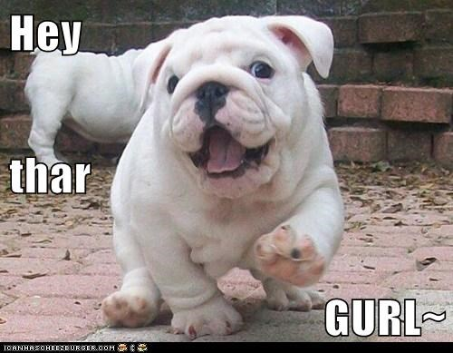 hey girl puppy bull dog - 7771955200