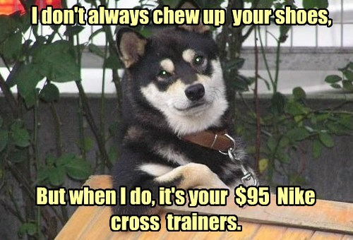 I don't always chew up your shoes, But when I do, it's your $95 Nike cross trainers.