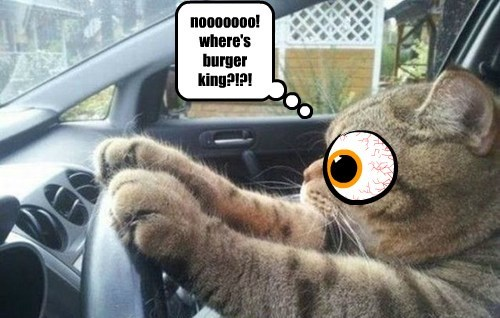 Cheezburger Image 7772320000