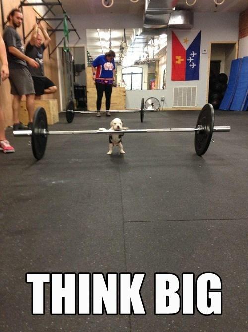 puppy cute weights lift