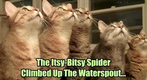 The Itsy-Bitsy Spider Climbed Up The Waterspout...