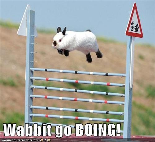 hurdles rabbit bunny - 7773136384