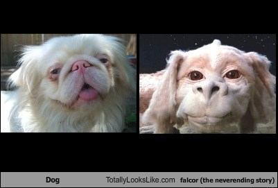 falcor dogs totally looks like the neverending story funny - 7773419264
