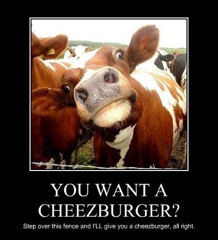 Cheezburger Image 7773587456