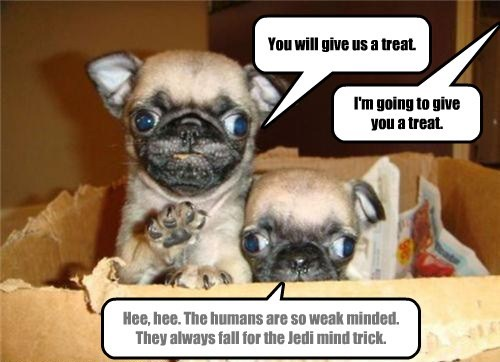 You will give us a treat. I'm going to give you a treat. Hee, hee. The humans are so weak minded. They always fall for the Jedi mind trick.