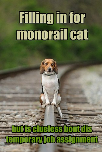 dogs job monorail cat confused - 7773678848